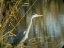 Bird Watching in Devon