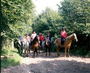 Horse Riding in Devon